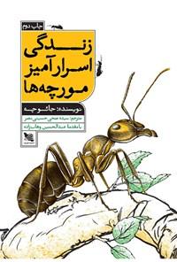 زندگی اسرارآمیز مورچهها